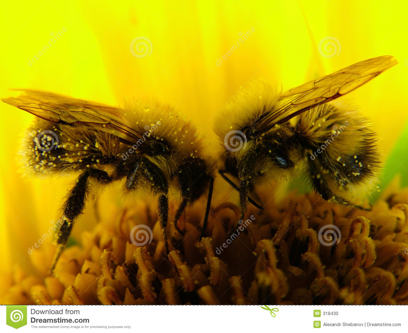 Bees - team work