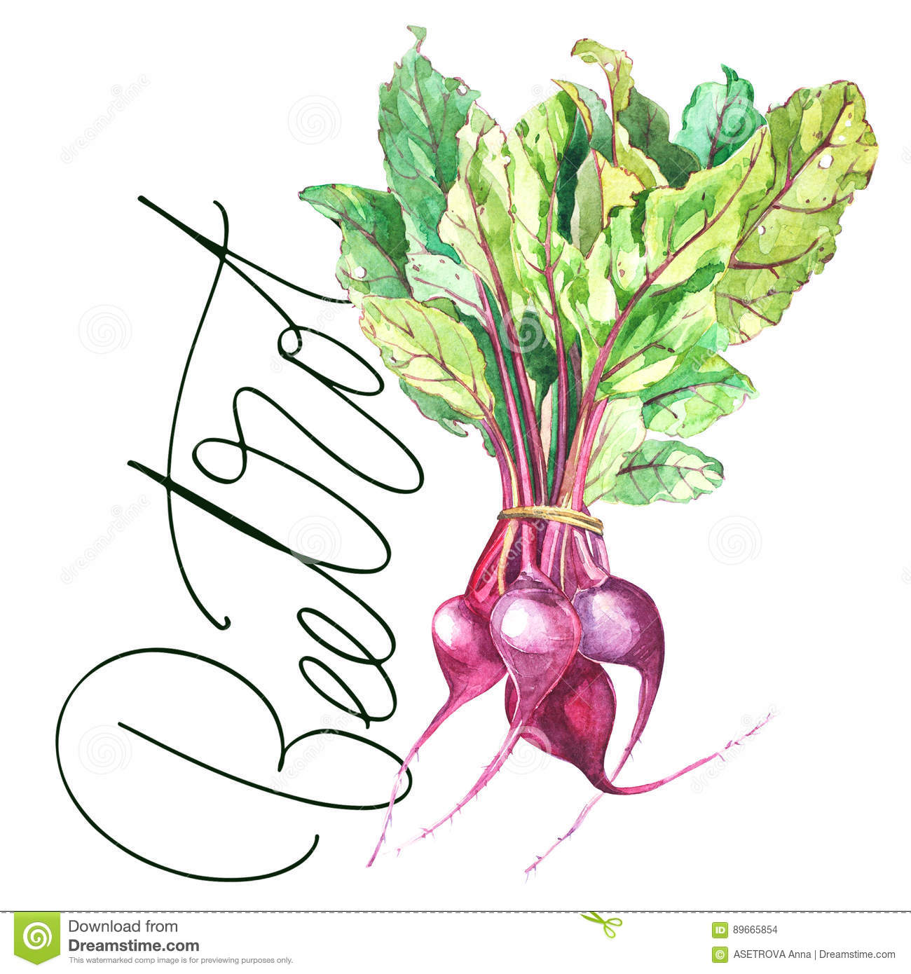 Beet Beetroot With Leaves Isolated Illustration Hand Drawn Painted