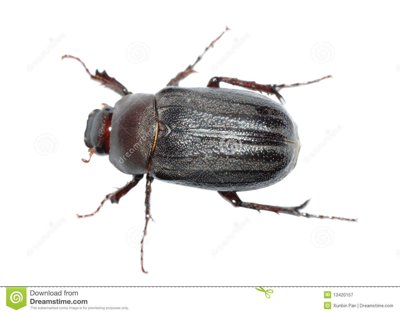 Beetle Bug Royalty Free Stock Photography - Image: 13420157