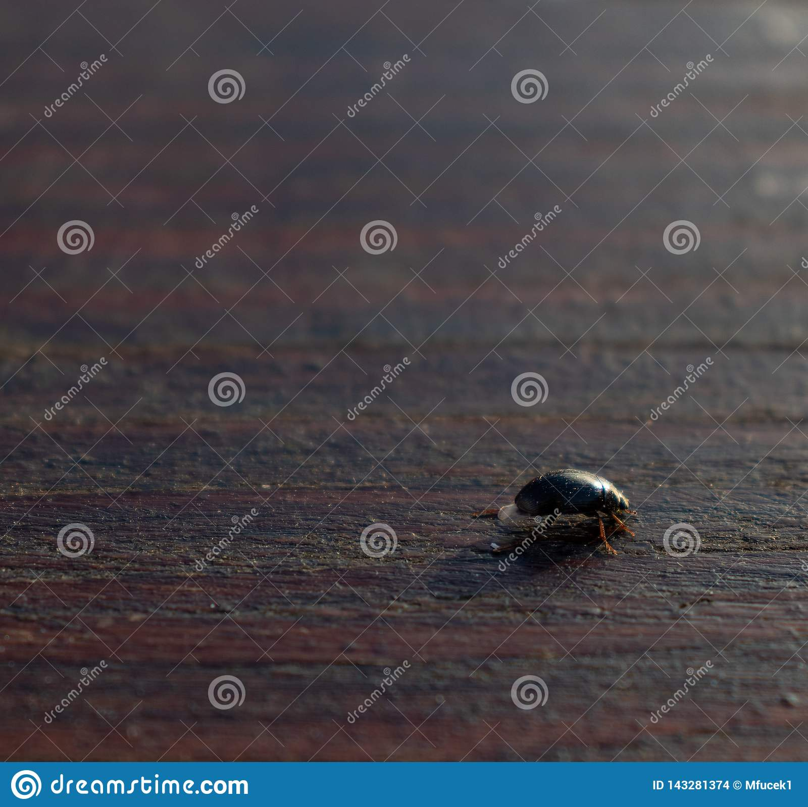 Beetle crawling on a brown wooden table