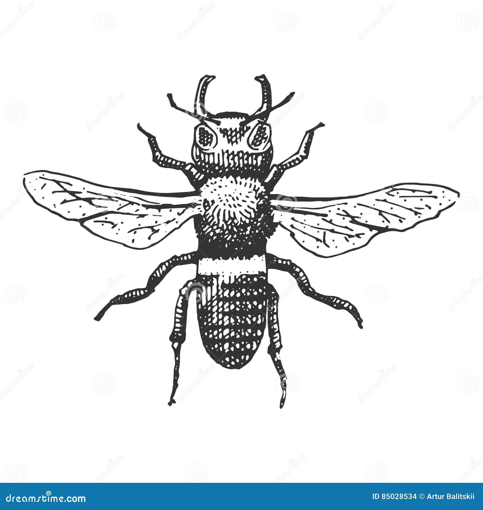 download hornet old version