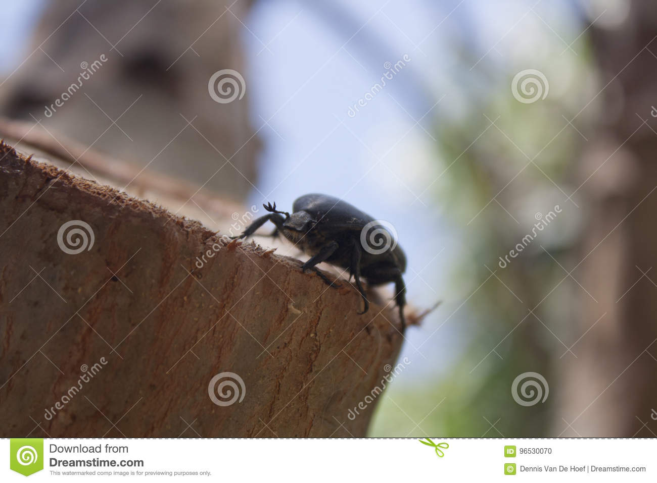 Beetle sitting on a tree. Close, insects.
