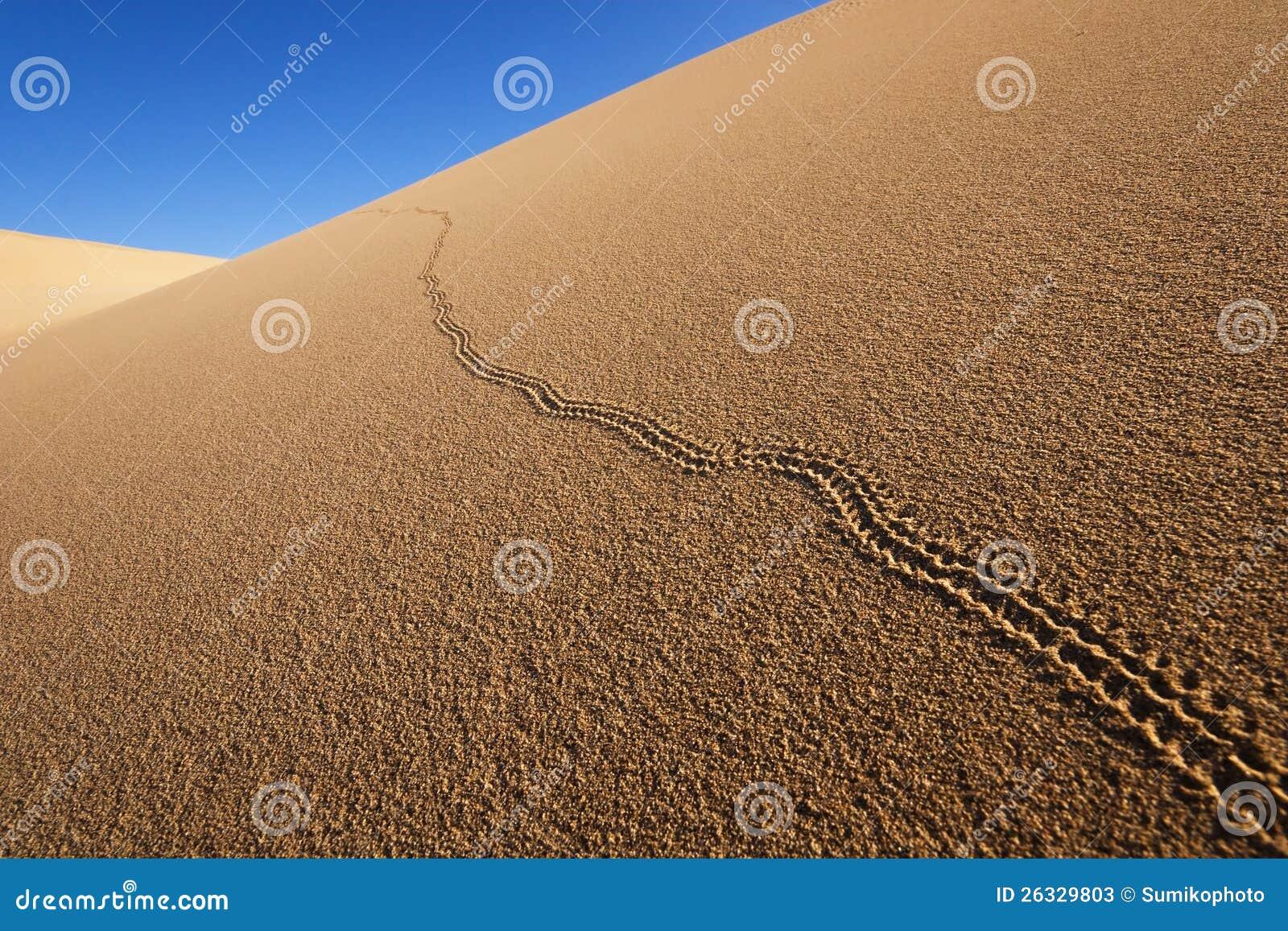 Beetle Tracks On Sand Dunes Stock Image Image Of Blue