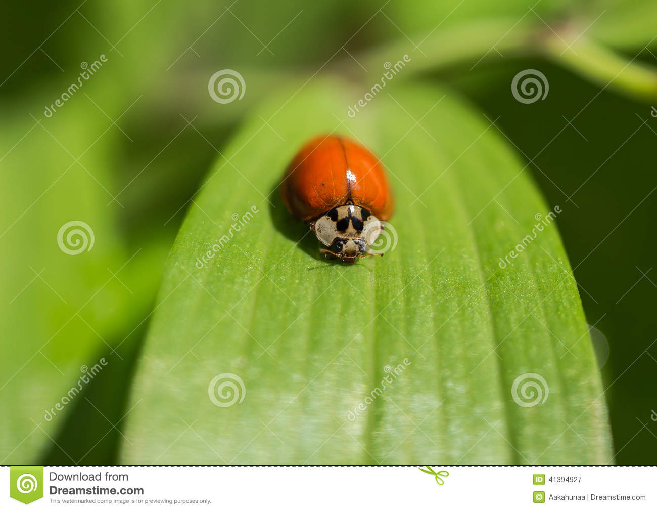 Finding Some Spots Of Bright Color At >> The Beetles Stock Image Image Of Leaves Outdoor Ecology 41394927