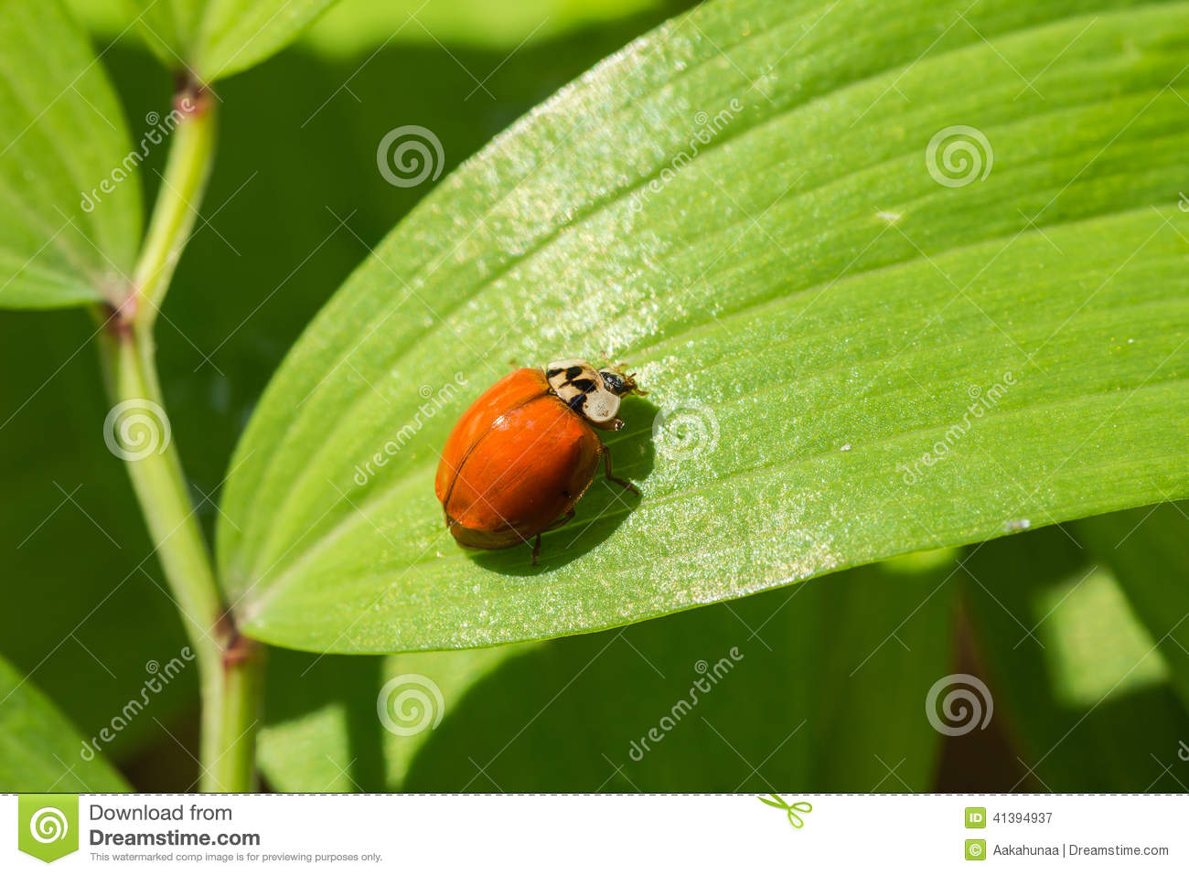 Finding Some Spots Of Bright Color At >> The Beetles Stock Image Image Of Outdoor Natural Ecology 41394937