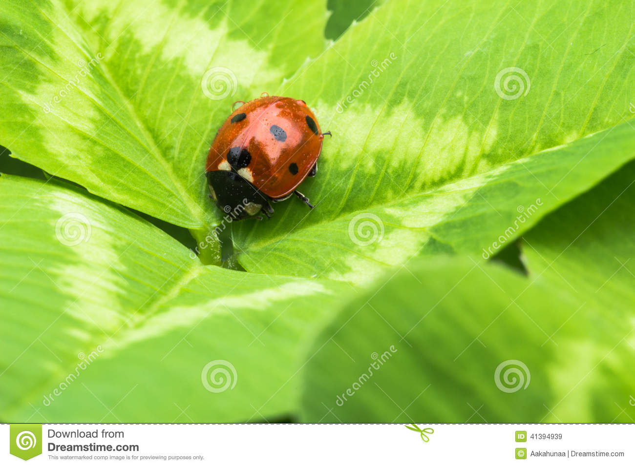 Finding Some Spots Of Bright Color At >> The Beetles Stock Image Image Of Close Environment 41394939