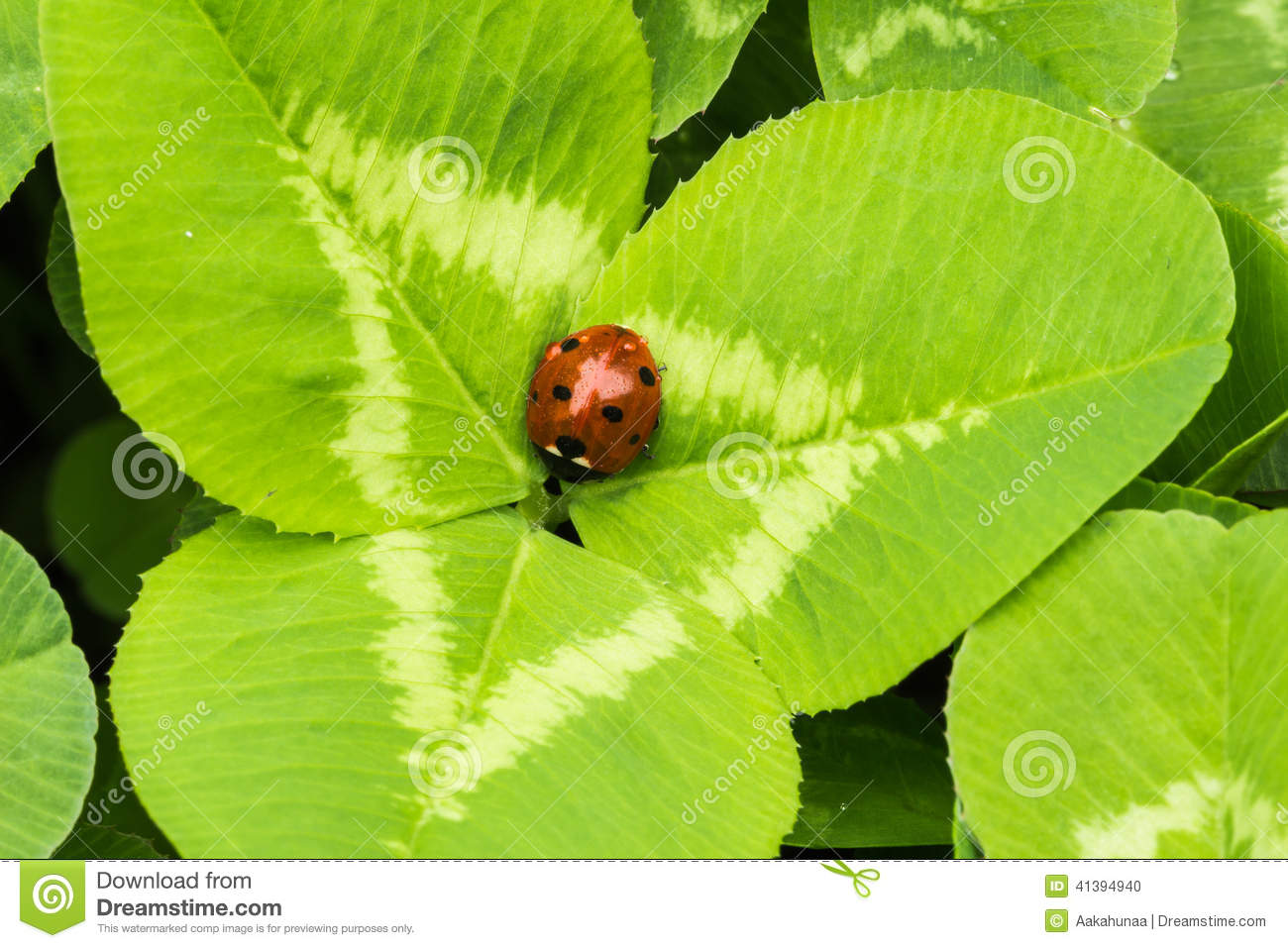 Finding Some Spots Of Bright Color At >> The Beetles Stock Photo Image Of Insects Ecology Close 41394940