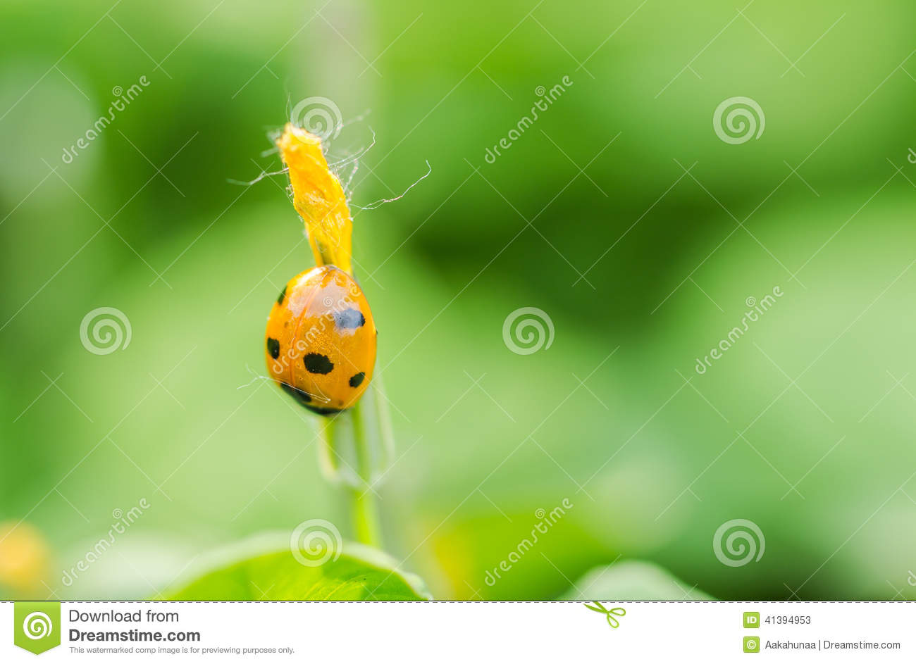Finding Some Spots Of Bright Color At >> The Beetles Stock Image Image Of Beetles Close Ecology 41394953