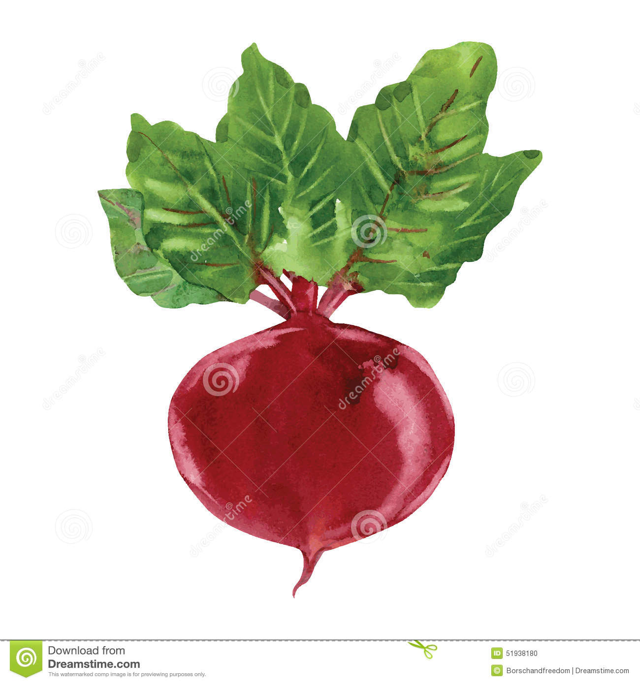 Beetroot Clipart | www.imgkid.com - The Image Kid Has It!
