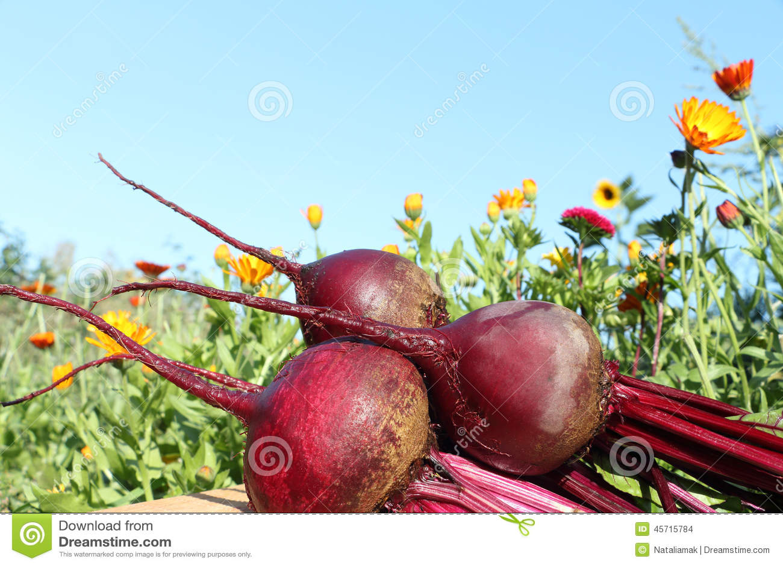 Beets Stock Photo Image 45715784