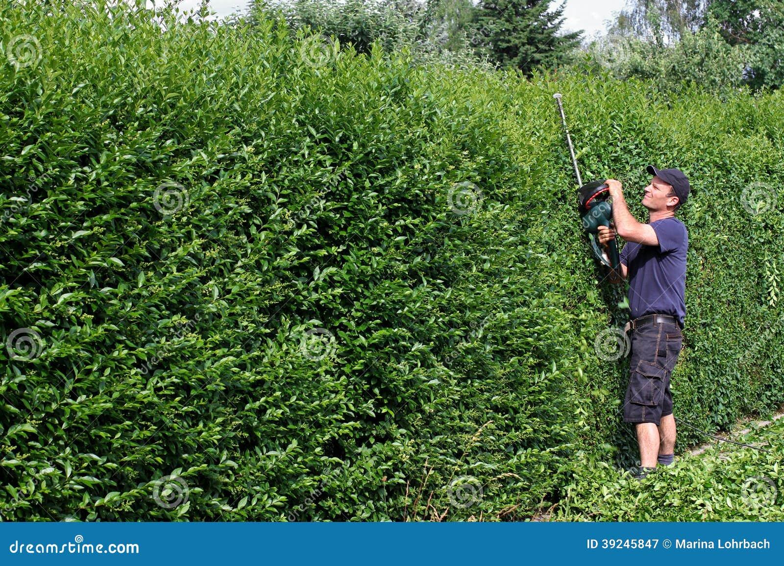 Befestigen sie eine hecke und im garten arbeiten stockbild for Garten arbeiten