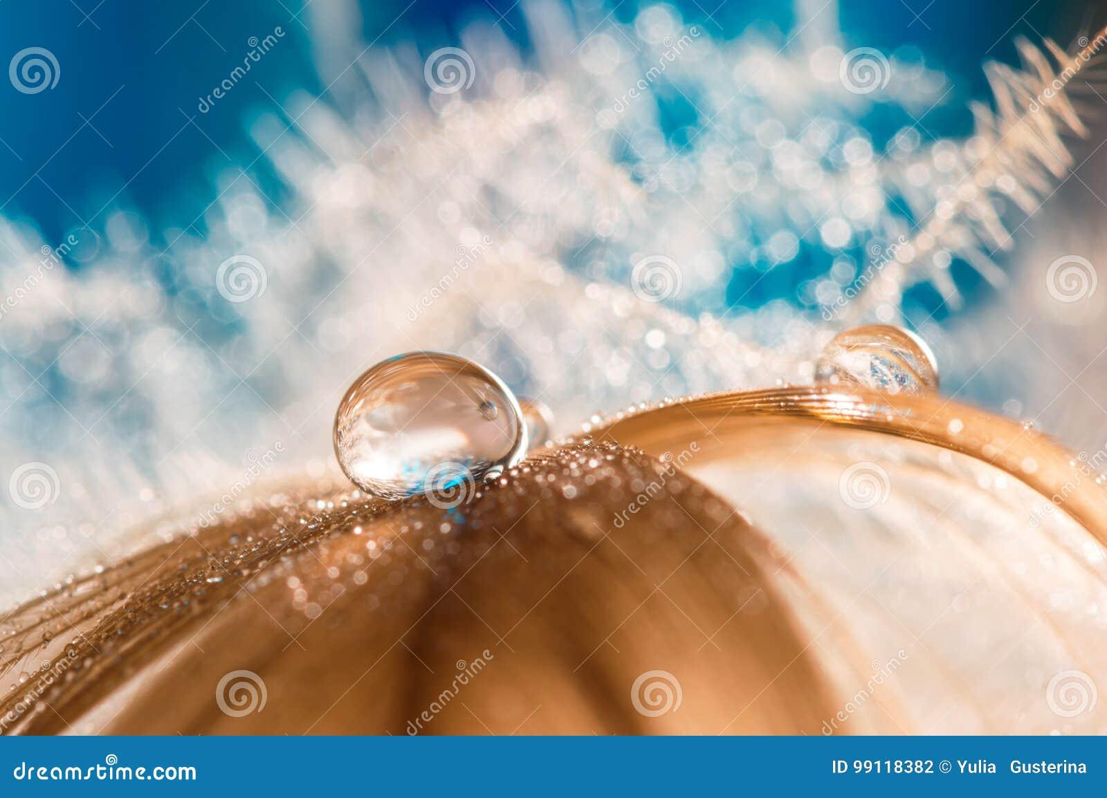 Befjädra fågeln av guld eller guling med vattendroppar på en blå bakgrund Abstrakt makro med en svanfjäder