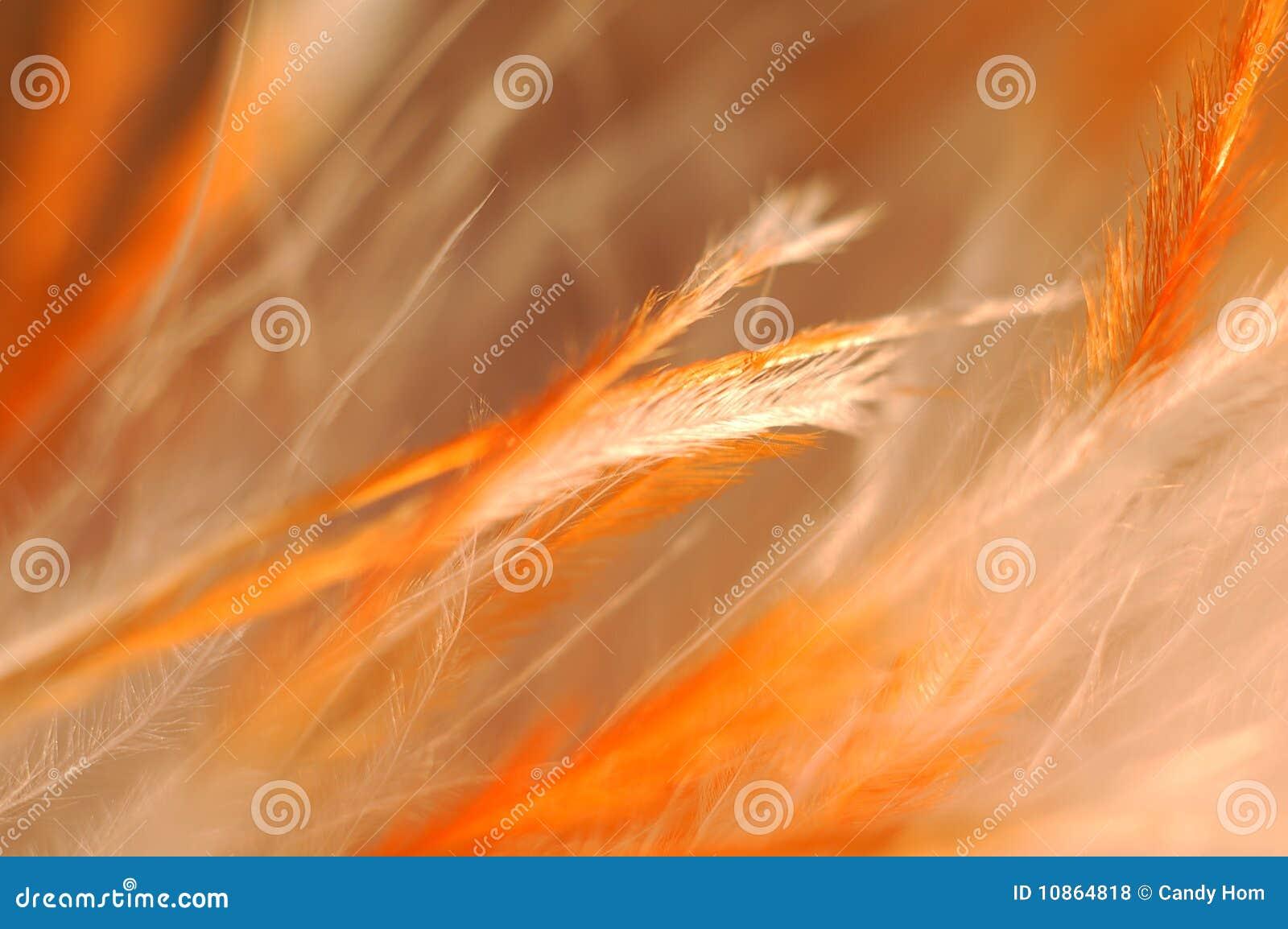 Befjädrar orangen