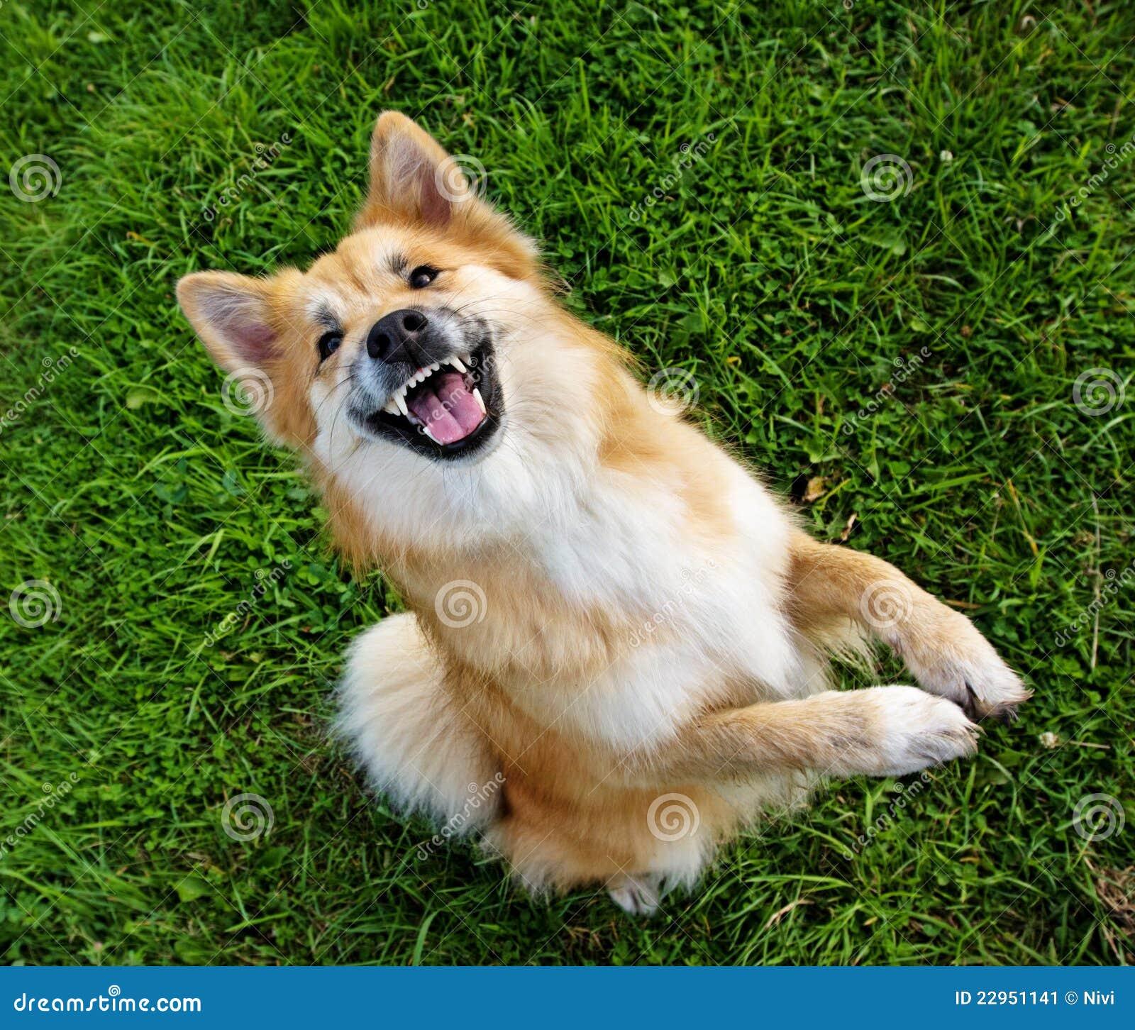 begging-dog-22951141.jpg