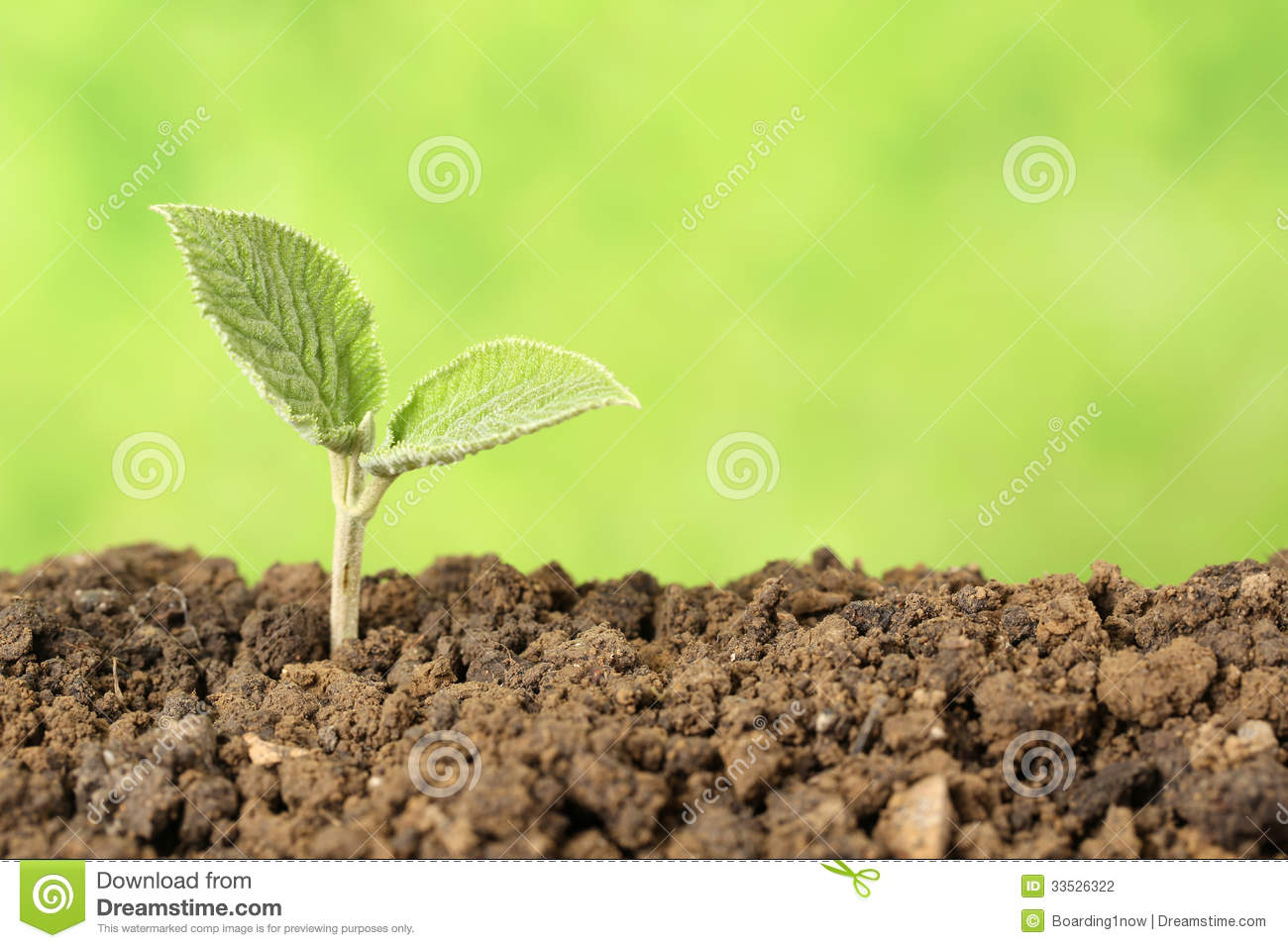 Beginning of a new life stock photo. Image of develop ...
