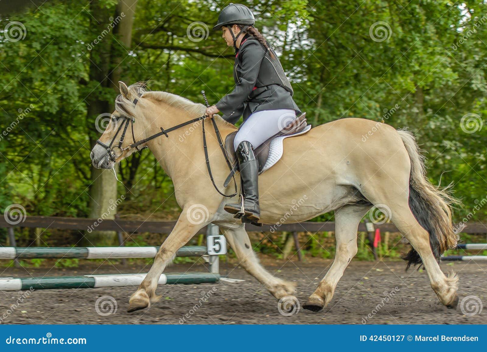 Begleiter-Tiere - Pferde