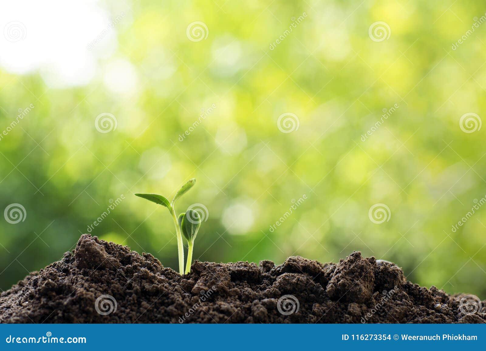Begrepp för värld för räddning för miljö för Csr-jordekologi