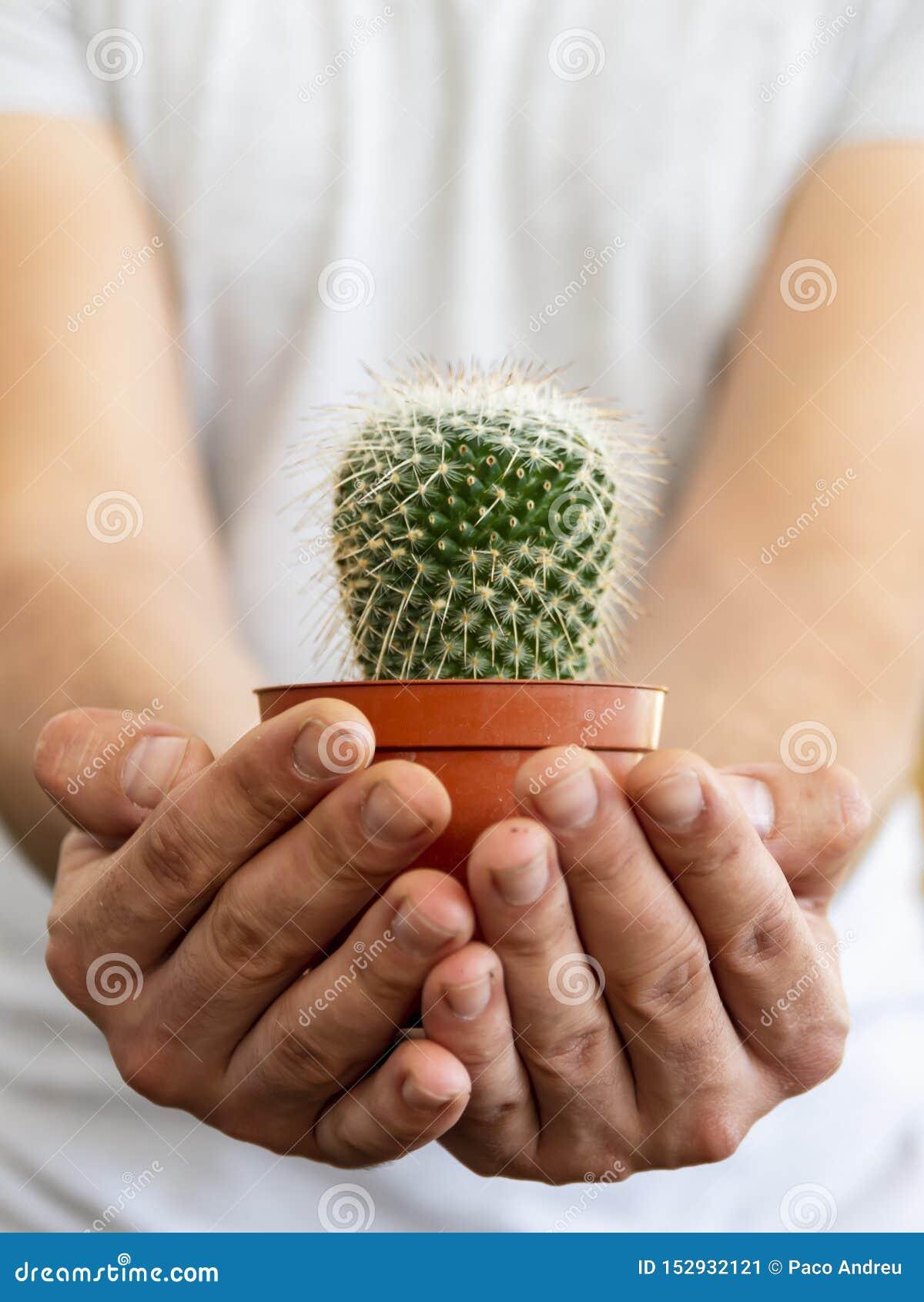 Begrepp med en ung man i skjortan som rymmer en kaktus med hans händer som föreslår omsorg