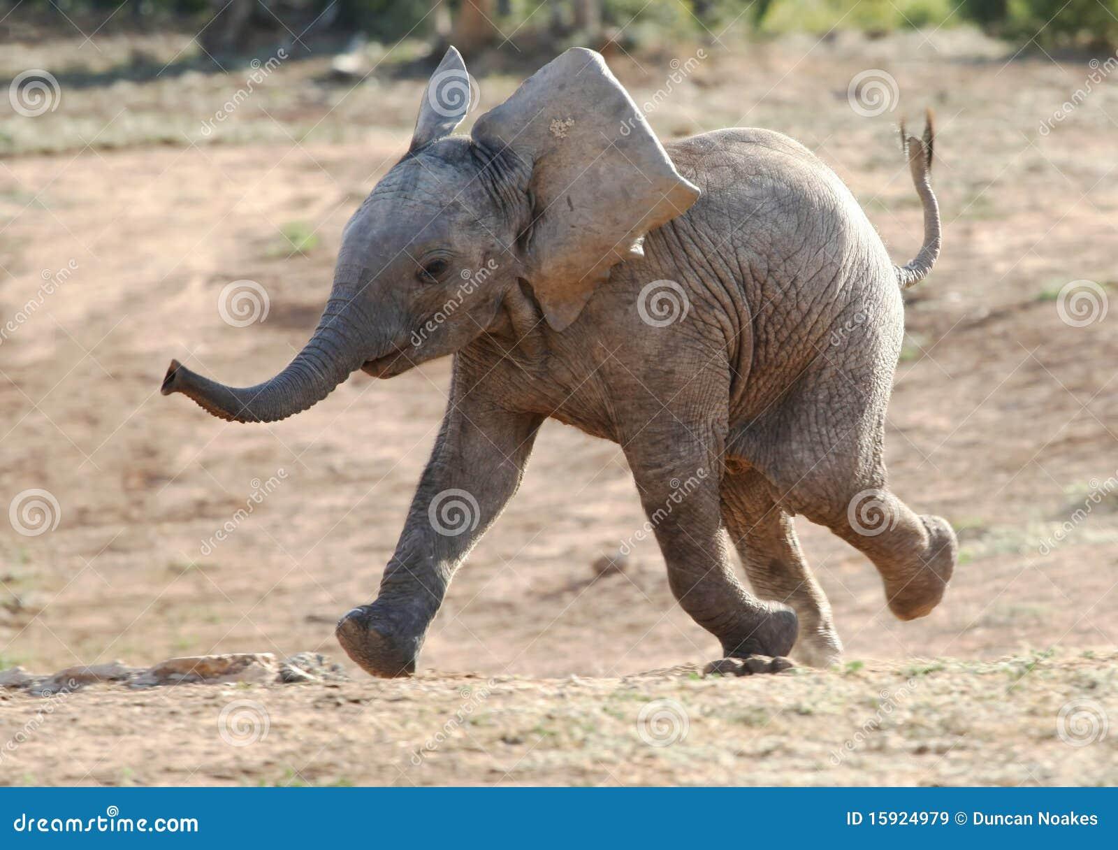 Behandla som ett barn elefantrunning