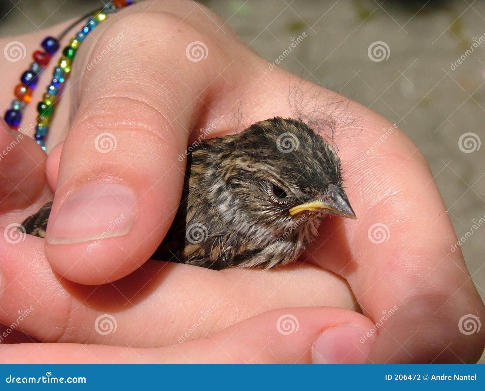 Behandla som ett barn fågeln