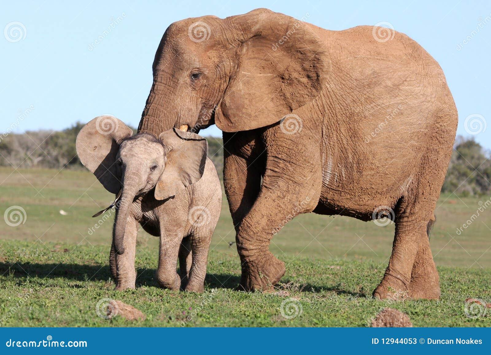 Behandla som ett barn fågeln som jagar elefanten