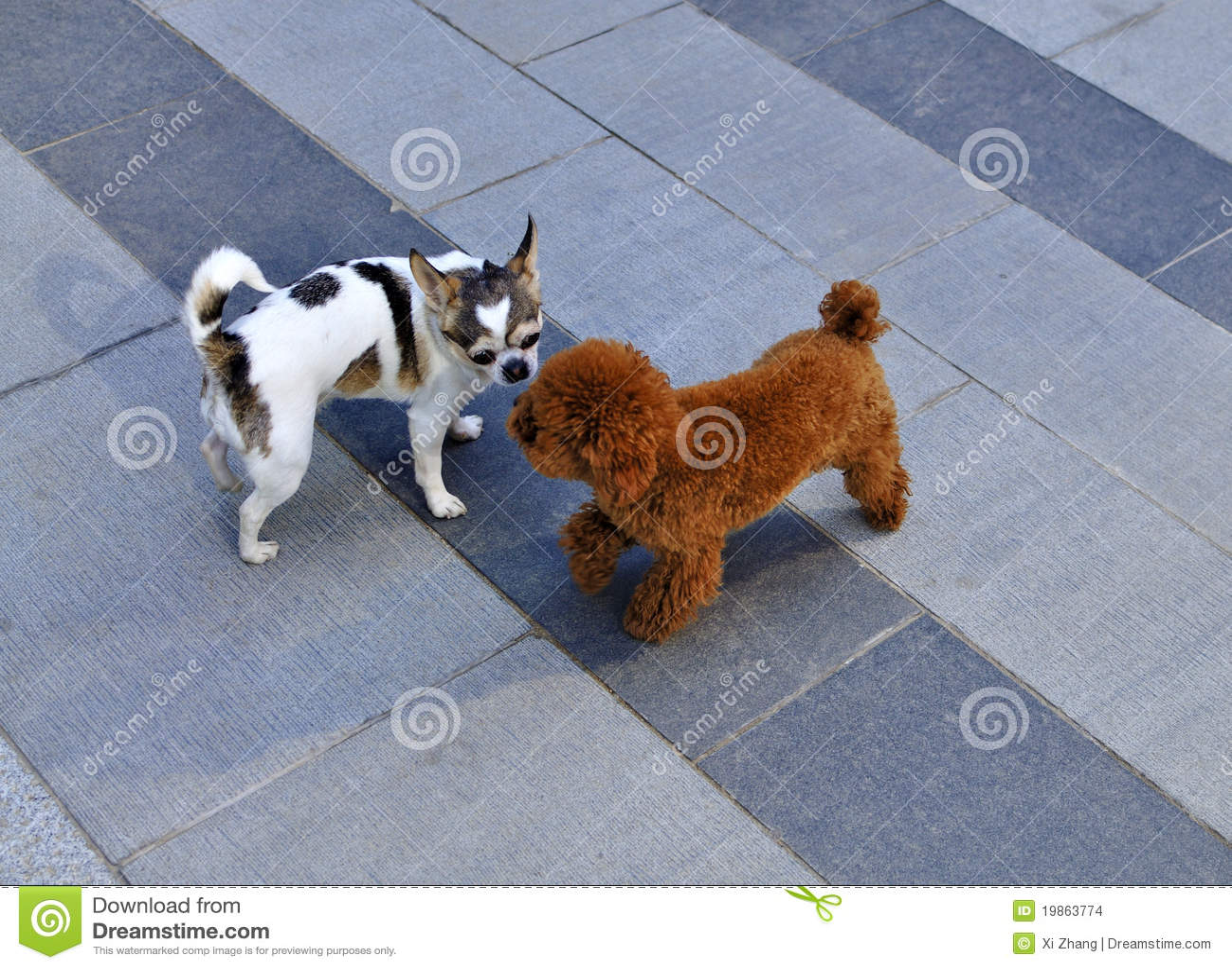 Behandla som ett barn hundar två