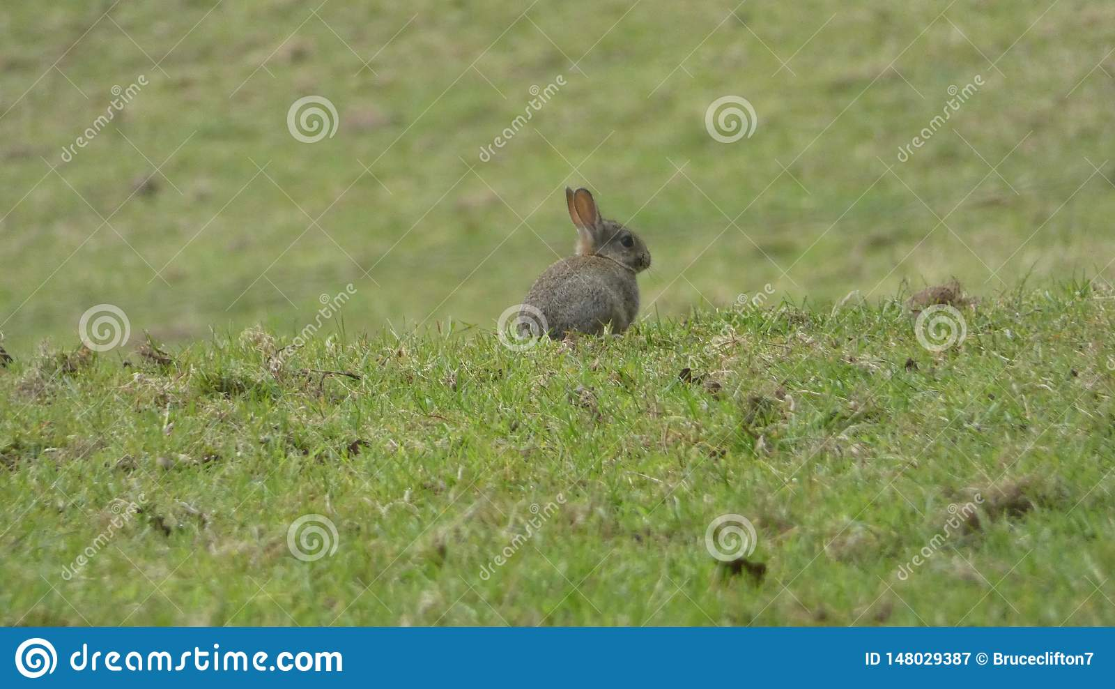 Behandla som ett barn kaninen i ett allt fält bara