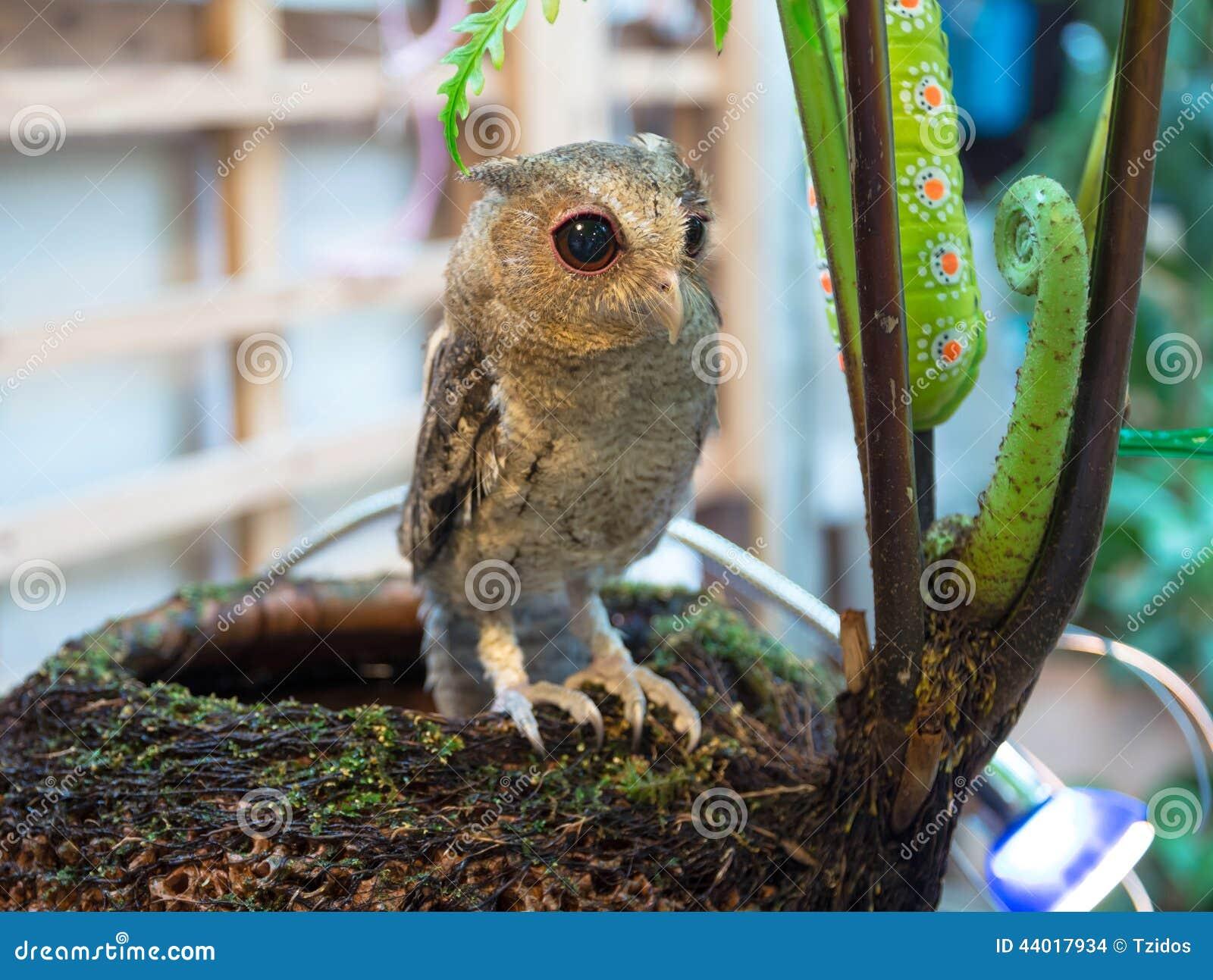 Behandla som ett barn länge gå i ax Owl Perching