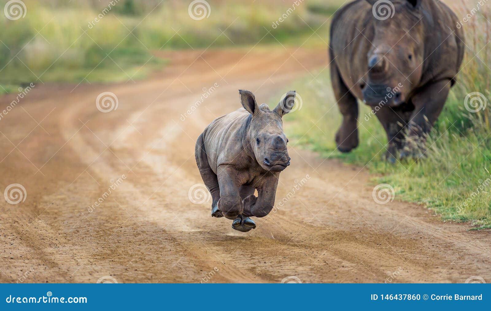 Behandla som ett barn noshörningspring