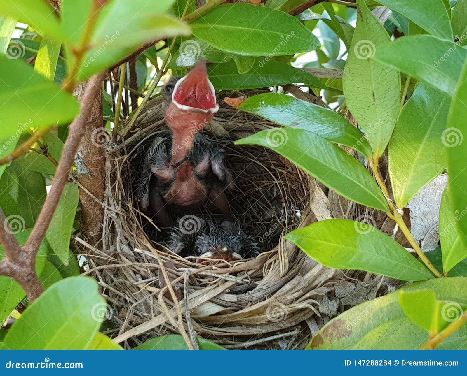 Behandla som ett barn precis bördiga fåglar skogen