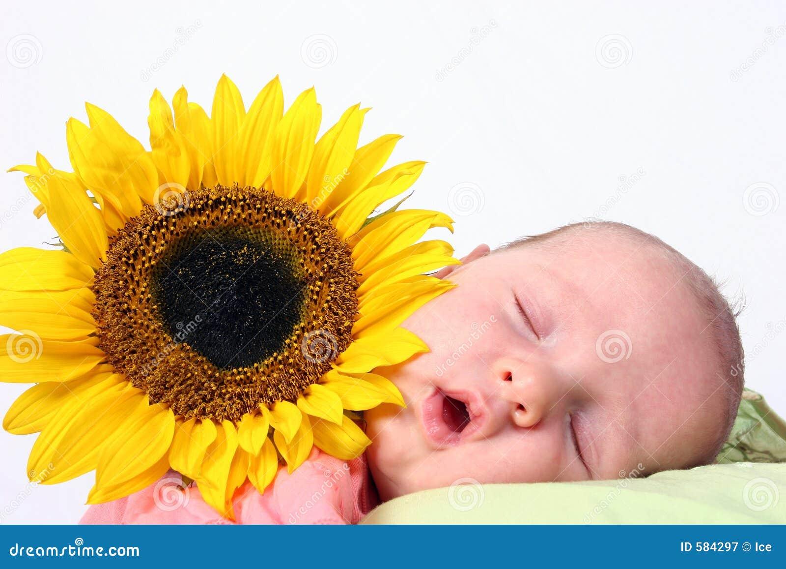 Behandla som ett barn solrosen