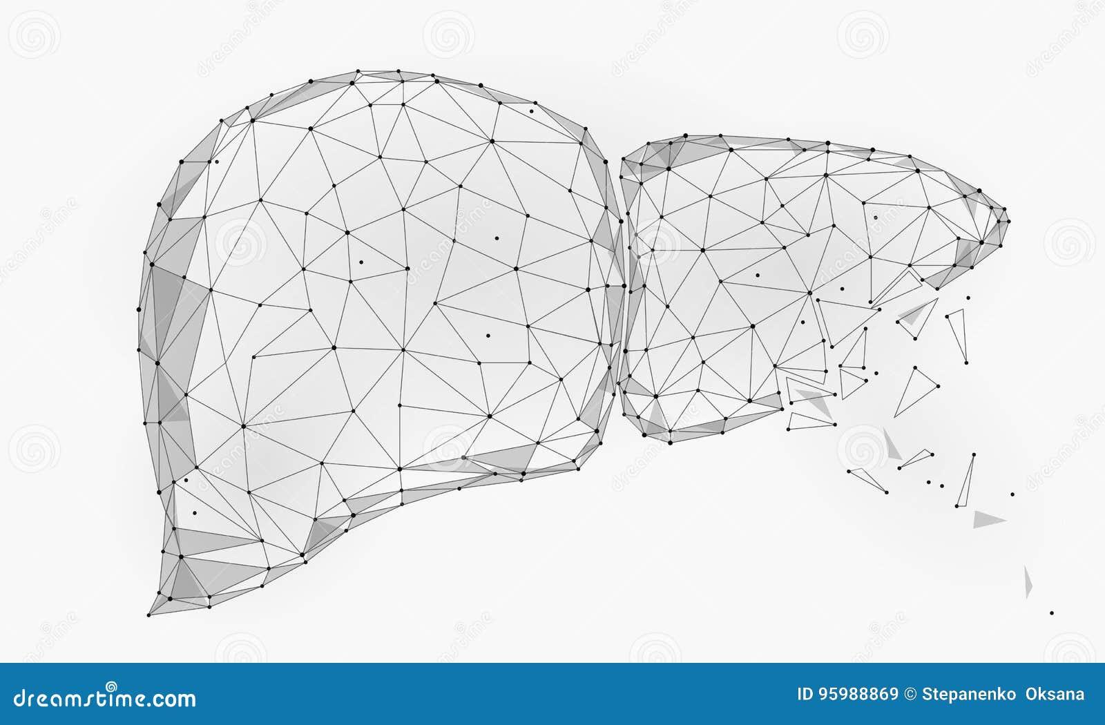 Behandlungsregenerationszerfall Menschliches Dreieck Des Leber ...