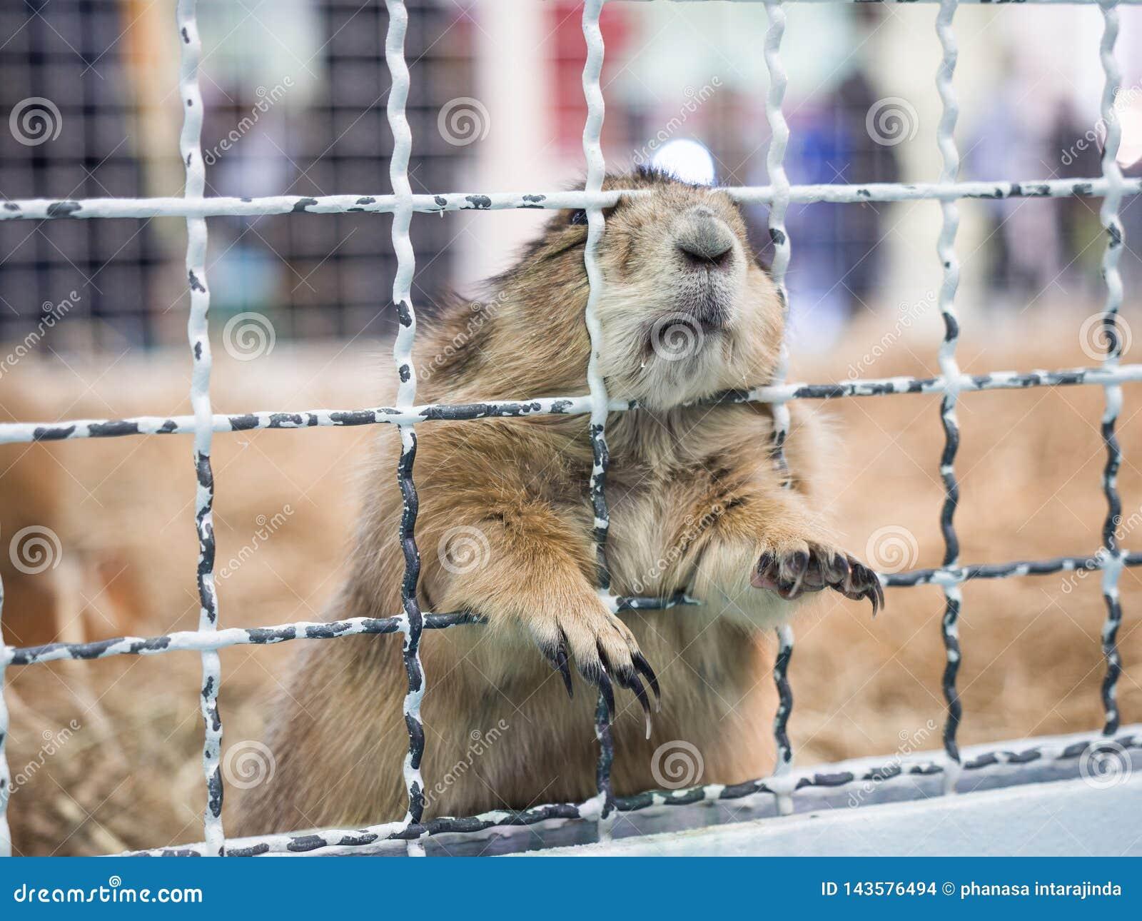 Behide da posição do cão de pradaria do close-up uma gaiola