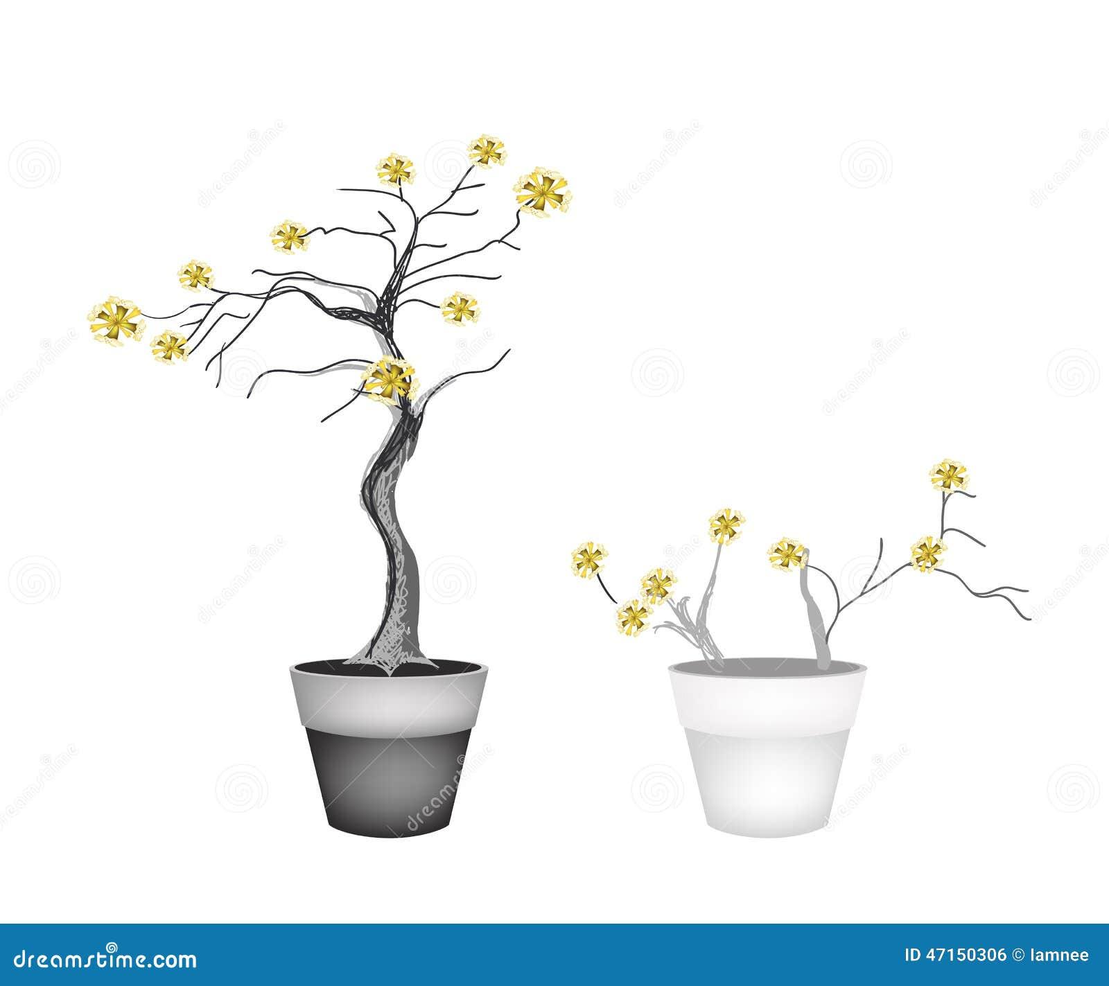 Bei alberi gialli in due vasi da fiori illustrazione for Vasi per bonsai prezzi
