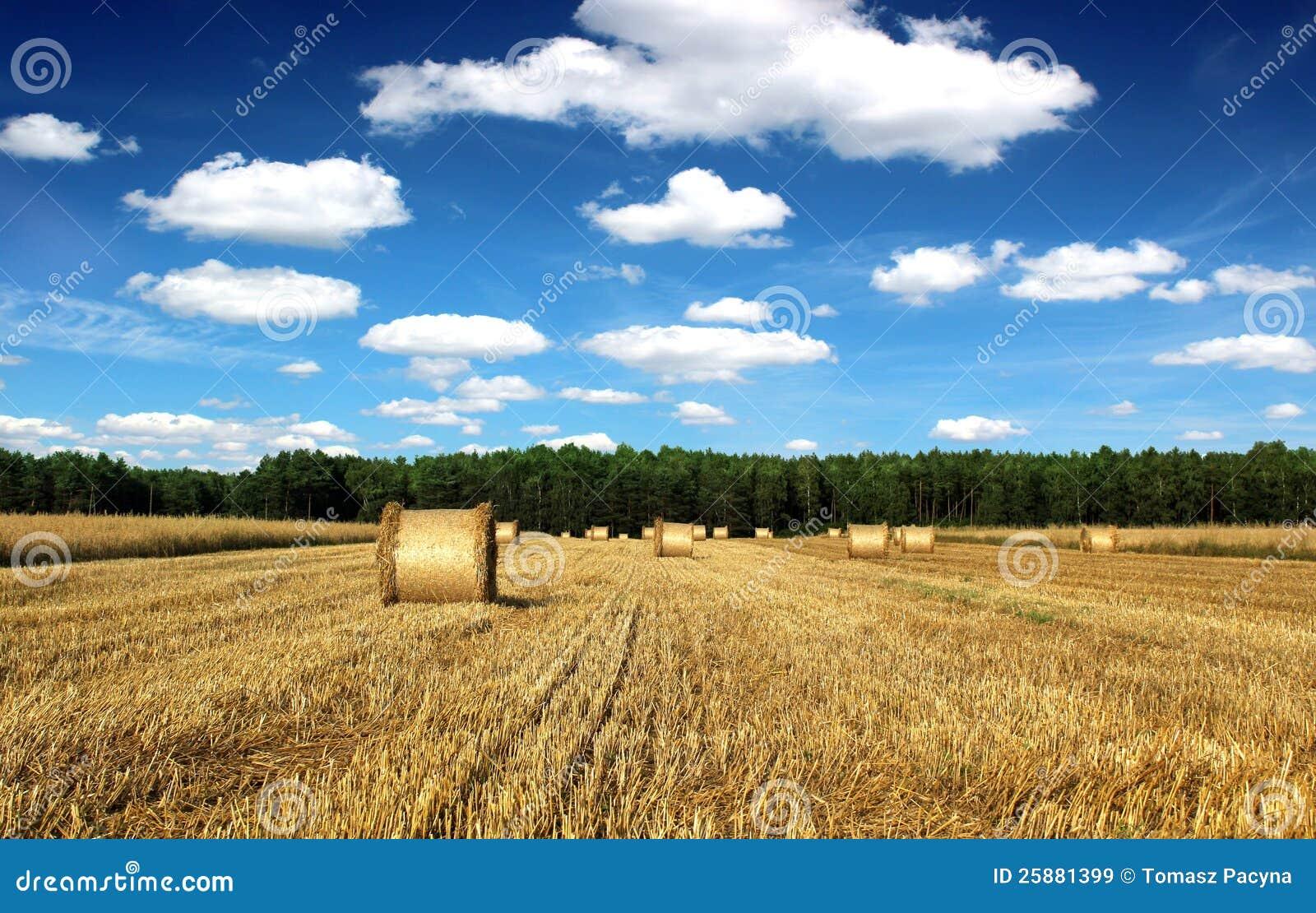 Bei covoni e campo di paesaggio della campagna immagine for Disegni di cabina di campagna