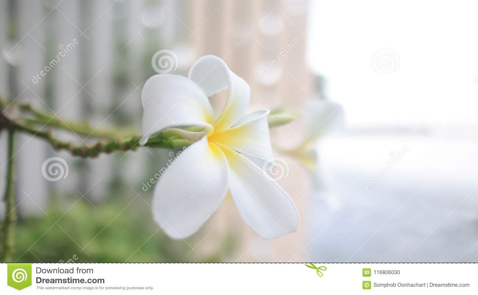 Bei fiore e natura