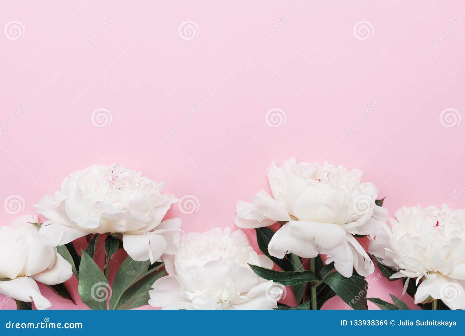 Fiori Bianchi Volanti.Bei Fiori Bianchi Della Peonia Sulla Vista Pastello Rosa Del Piano