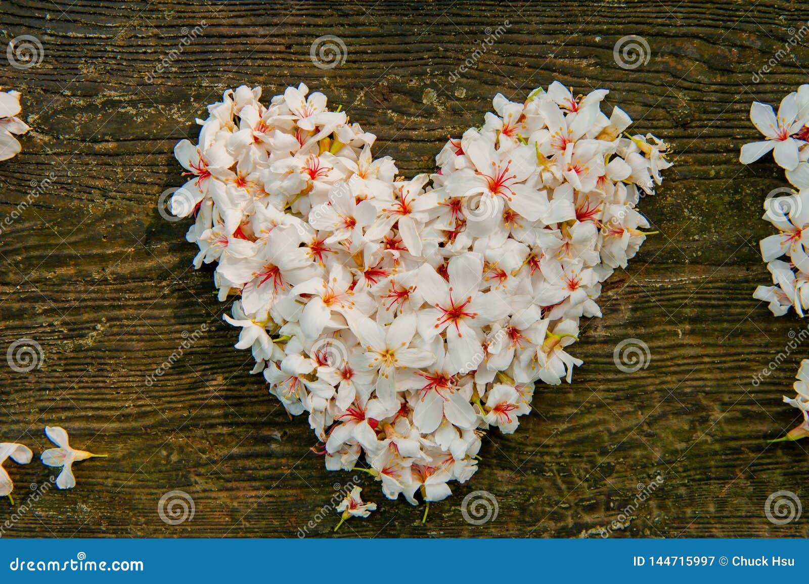 Bei fiori bianchi forma del cuore del ? del ? del flower? dell albero del ?tung del ? del