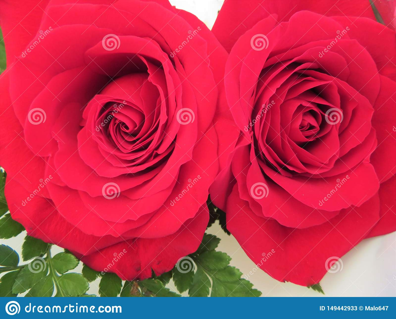 Bei fiori dei colori intensi e di grande bellezza