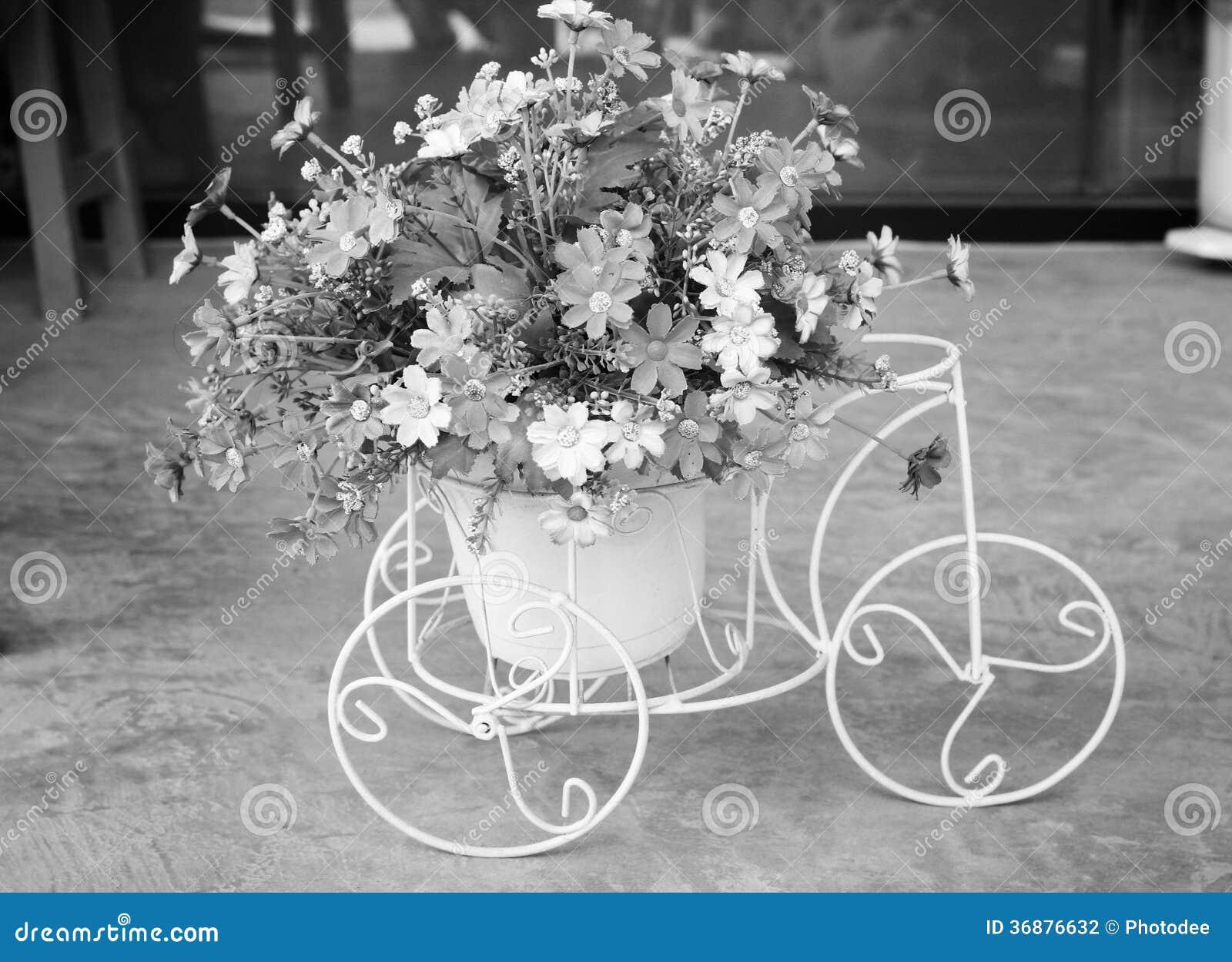 Download Bei fiori del crisantemo fotografia stock. Immagine di crisantemo - 36876632