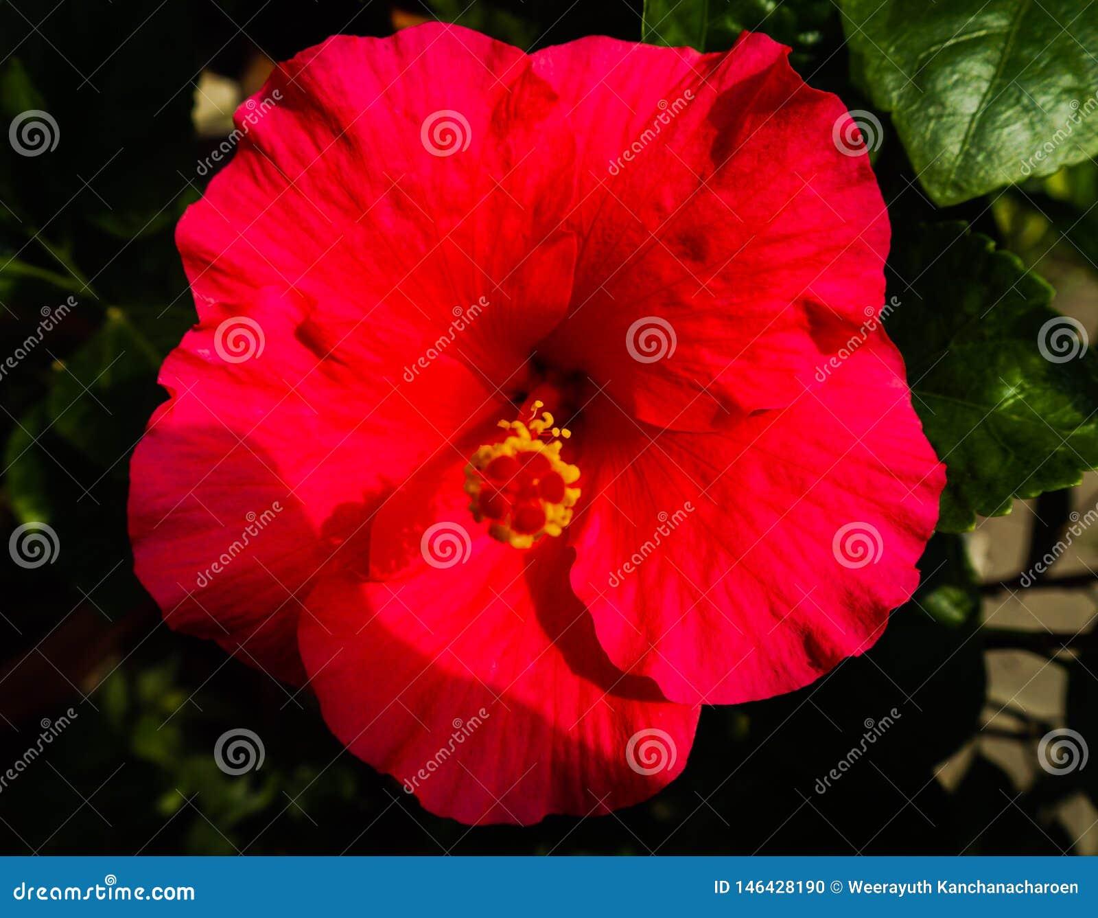 Bei fiori di colore rosso del primo piano nei parchi verdi all aperto