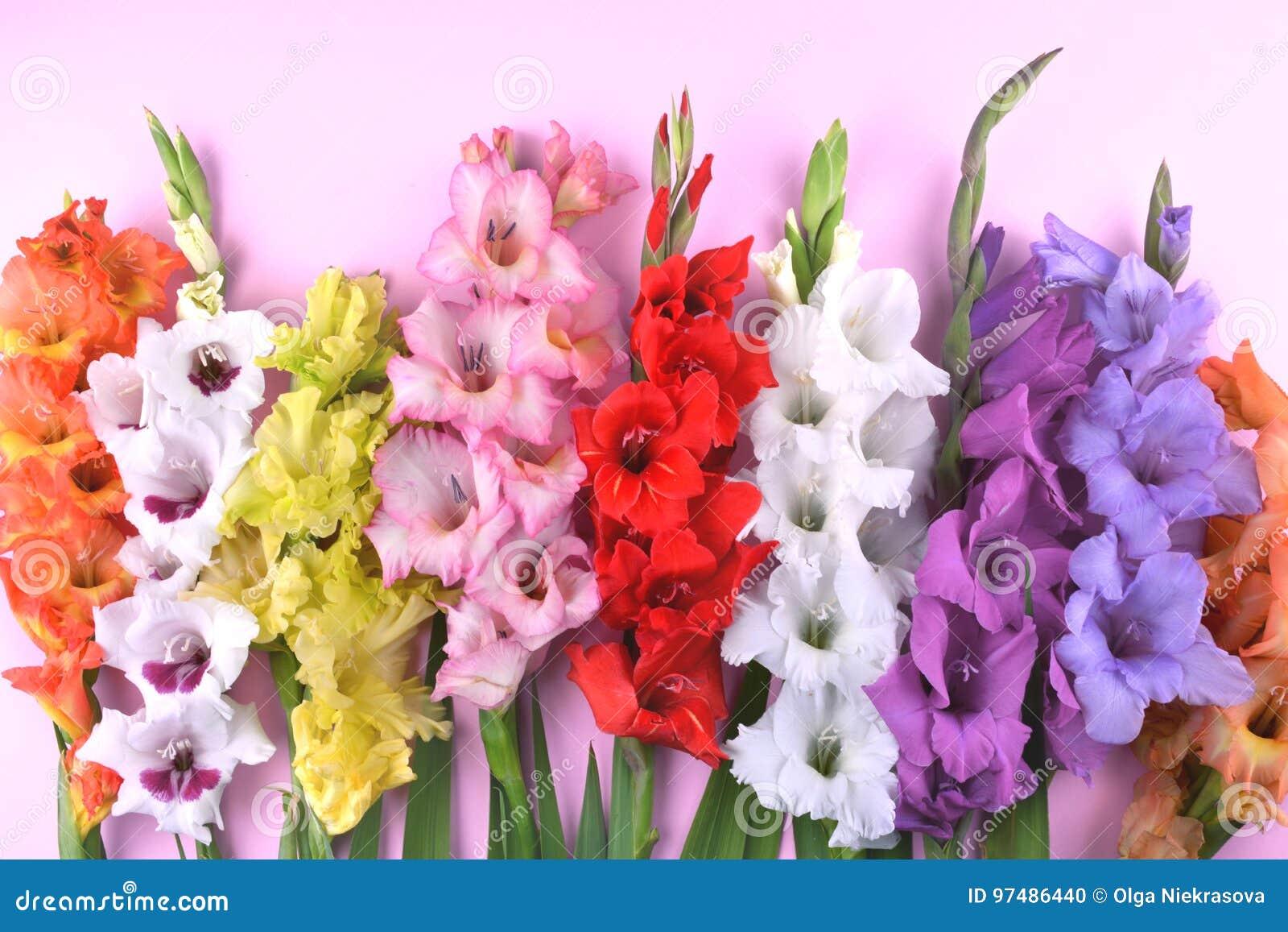 Bei fiori di gladiolo su fondo rosa d avanguardia