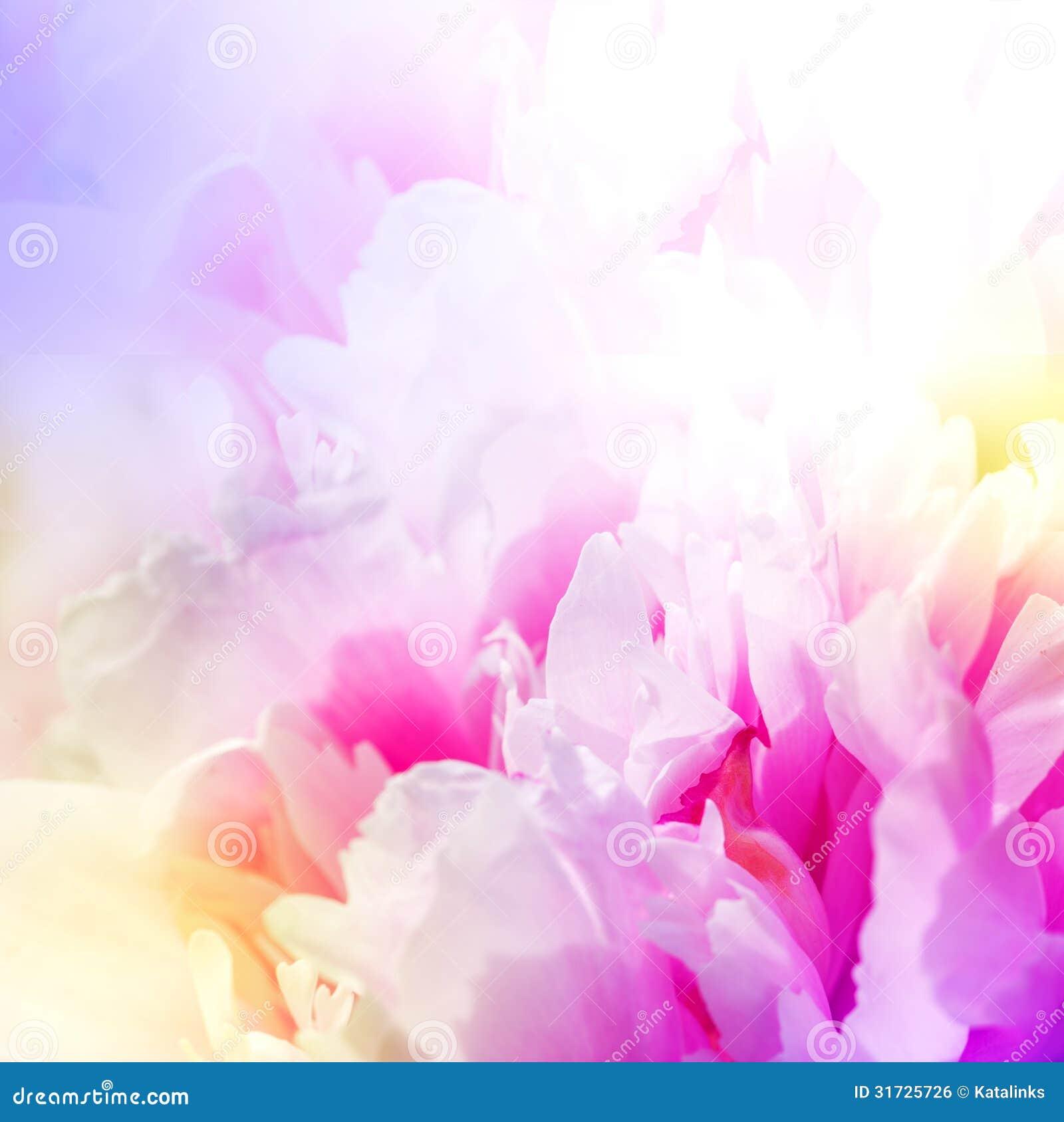 Bei fiori rosa di Defocus. progettazione astratta