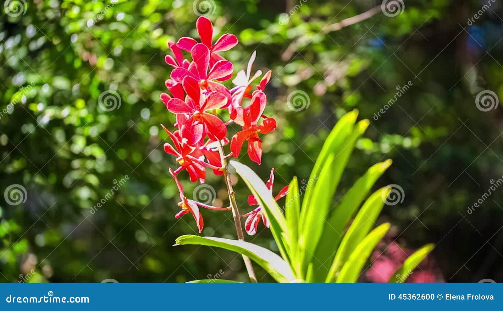 fiori rossi estivi
