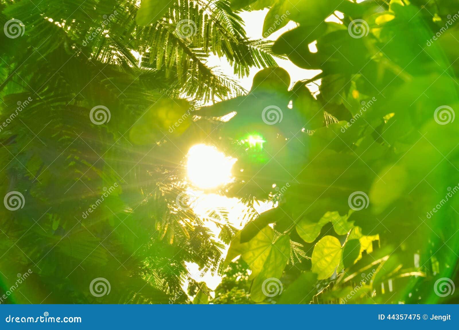 Bei fogli di verde