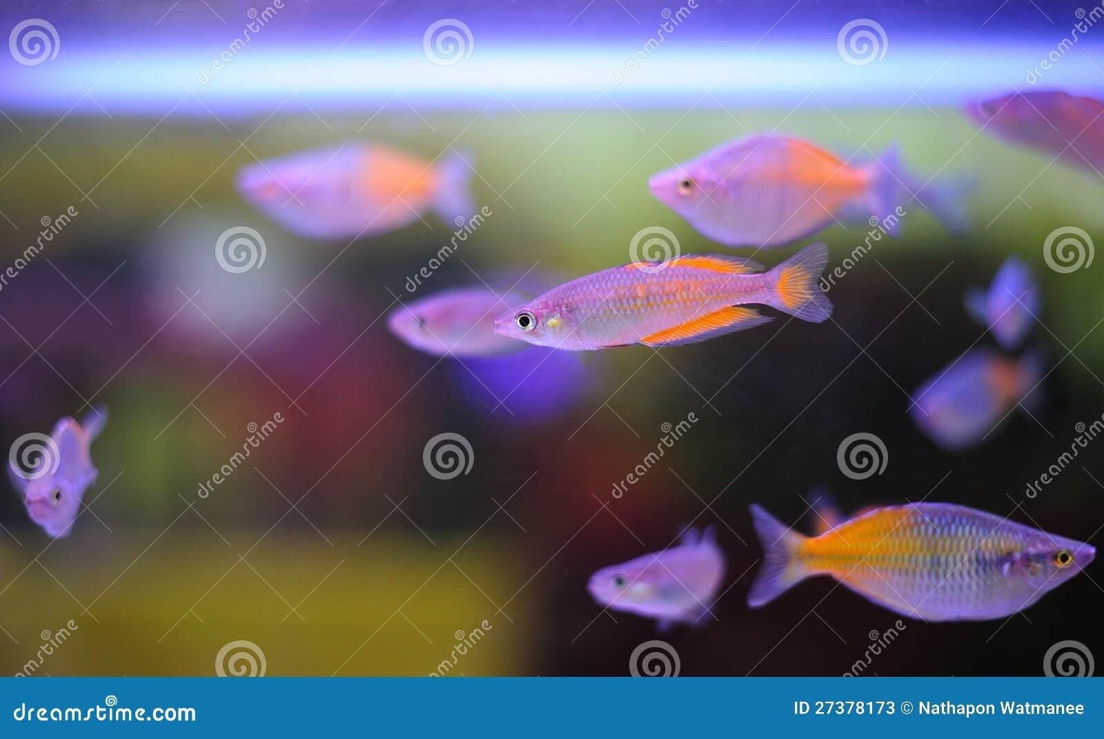 Bei pesci.