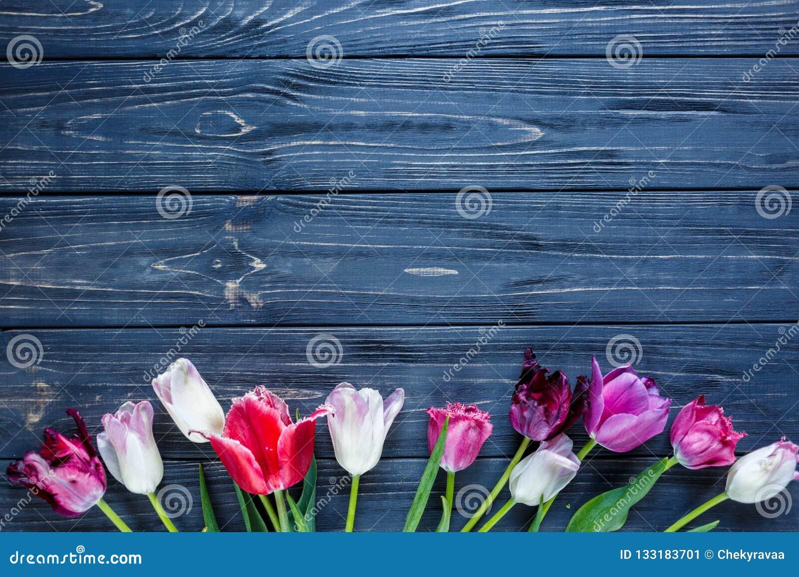 Bei tulipani viola rosa variopinti sulla tavola di legno grigia Biglietti di S. Valentino, fondo della molla Derisione floreale s