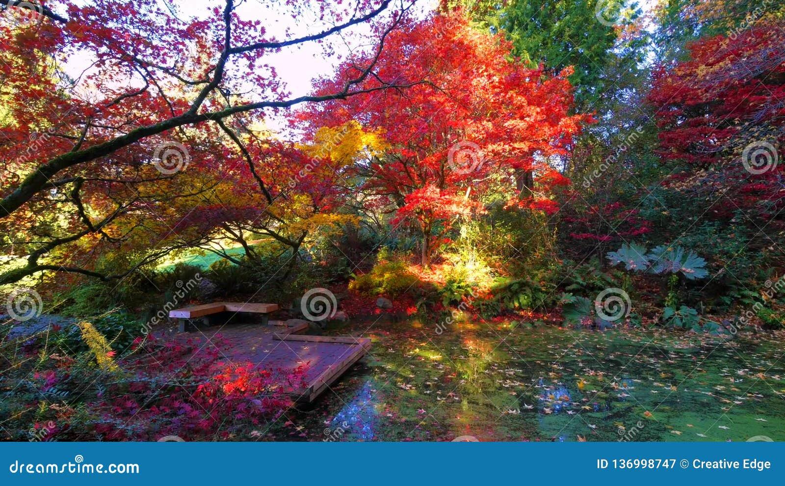 Bei Washington Autumn Nature Scenery - Washington Park Arboretum