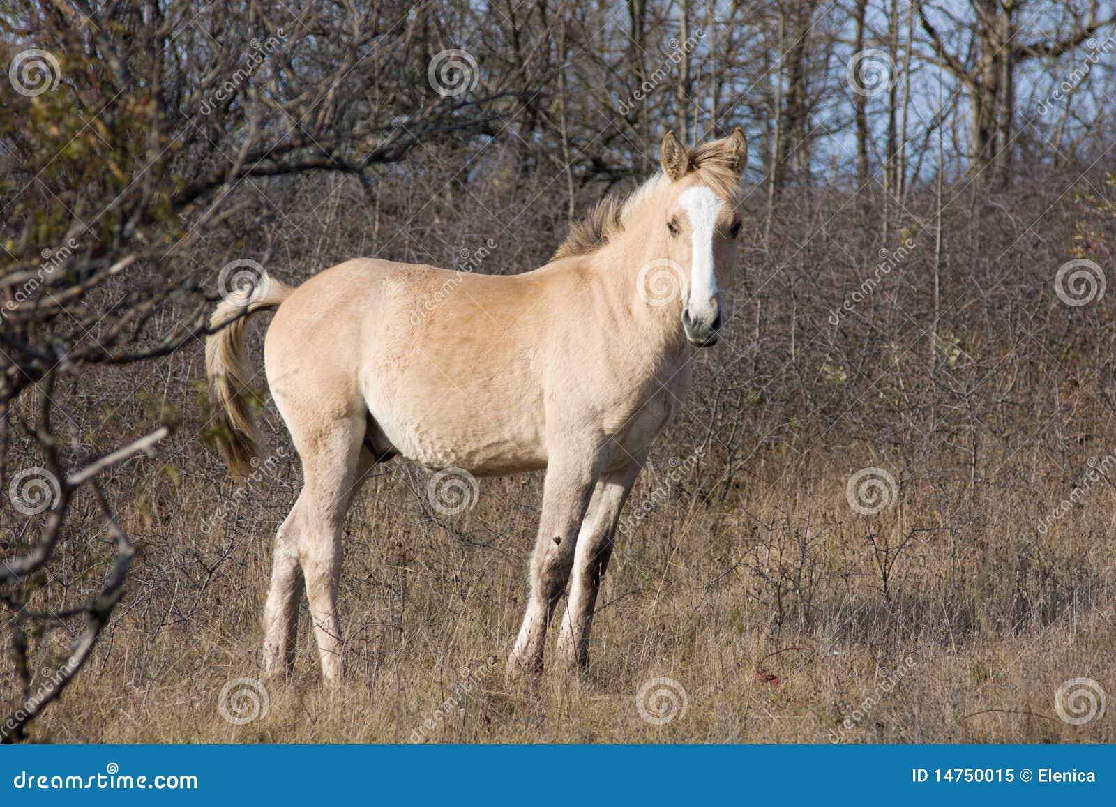 beige pferd im holz stockbild. bild von bauernhof, wiese - 14750015