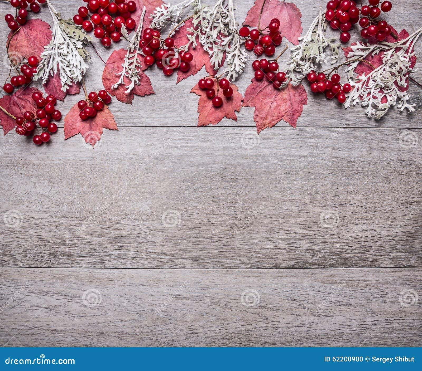 A beira com folhas de bordo vermelhas, as bagas do viburnum e o cenário do outono no fim rústico de madeira cinzento da opinião s